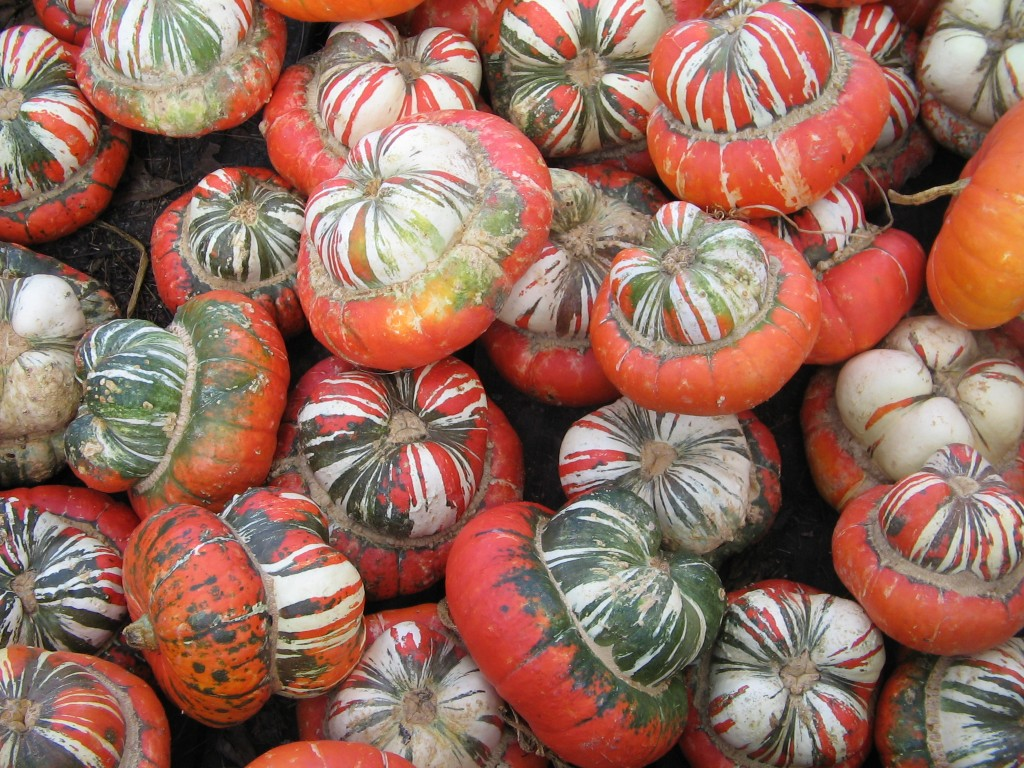 Multi Gourds